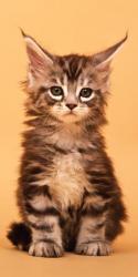 Detská osuška Jerry Fabrics Mačky