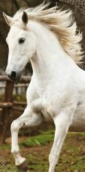Detská osuška Jerry Fabrics White horse